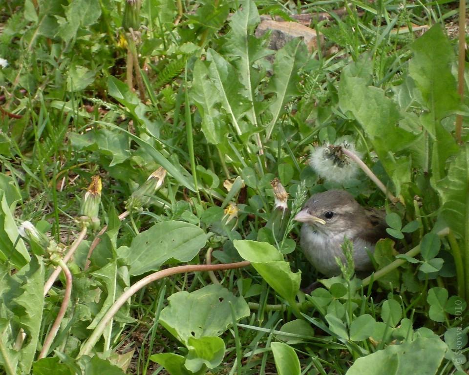 Птенчик в траве