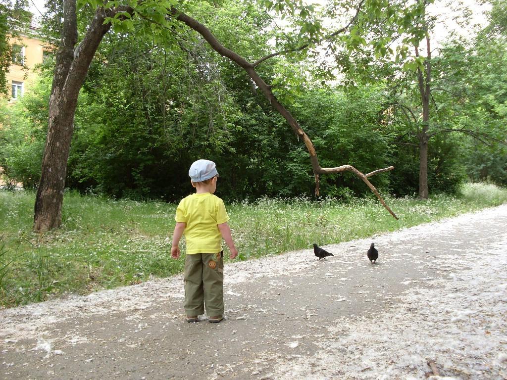 Тёма и голуби