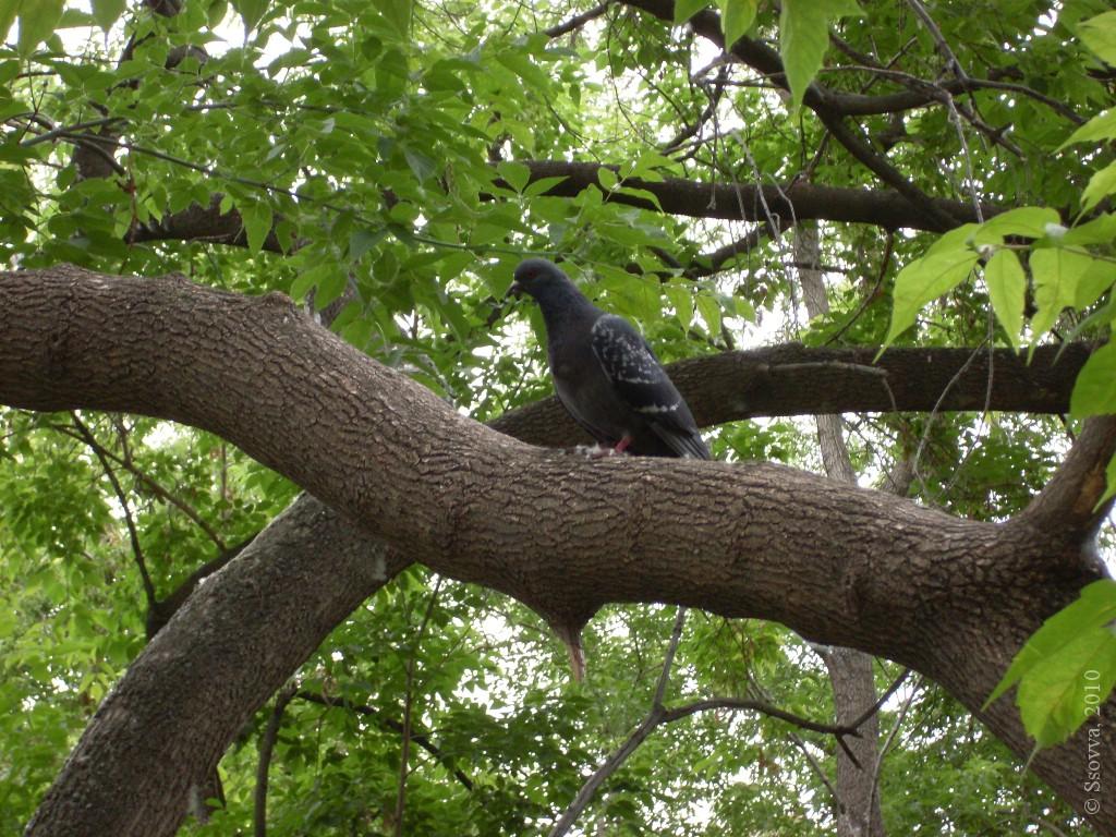Голубь на ветке дерева