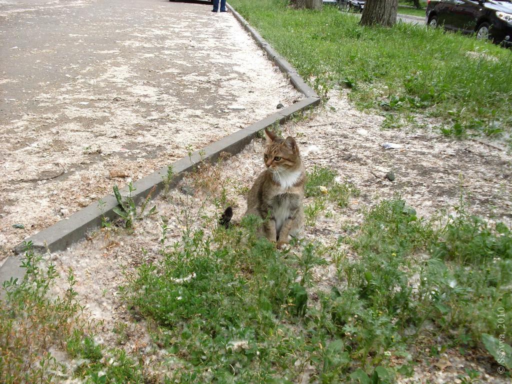 Кошка у дорожки